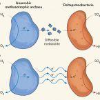 anaerobic methane oxidation