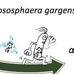 Nitrososphaera gargensis